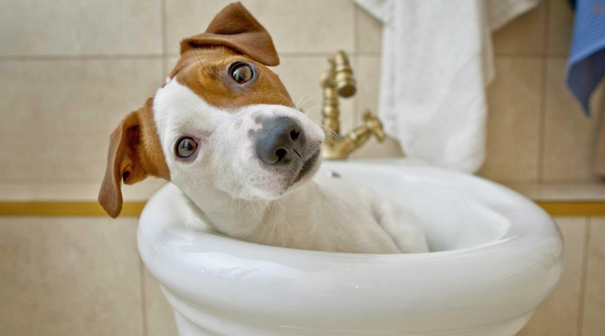 Cane al bagno - Diarrea del cane - Veterinario San Giorgio
