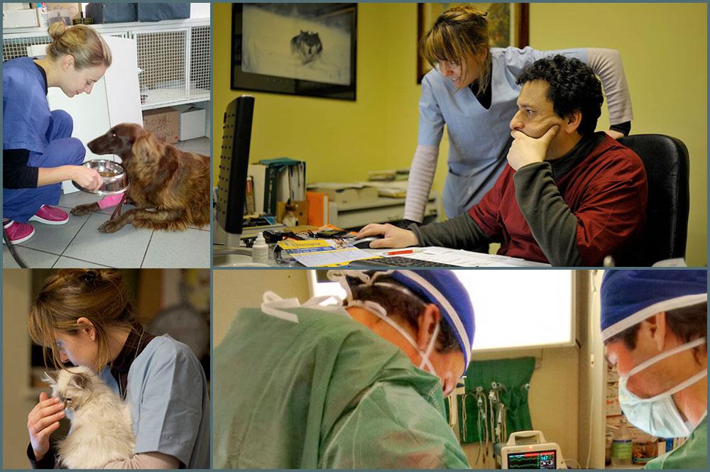 Centro Veterinario San Giorgio - Staff a lavoro.jpg